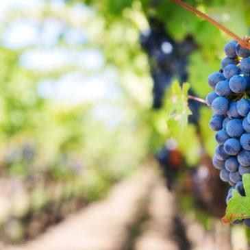 Por qué es tan conocido el vino Rioja