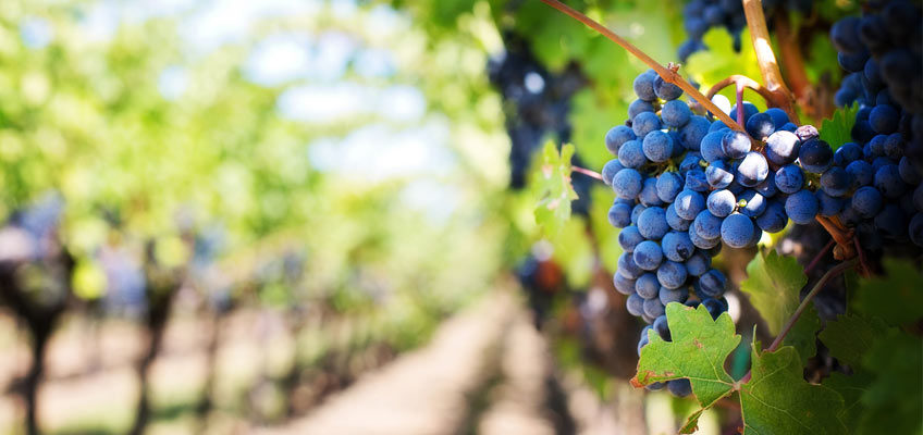why is Rioja wine so well known