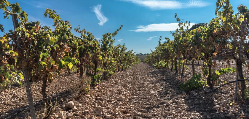 cómo se elabora el vino