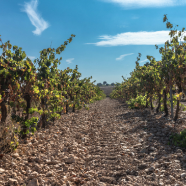 Cómo se elabora el vino: Las 6 etapas clave