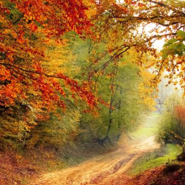 Autumn: The 4 best wines to toast