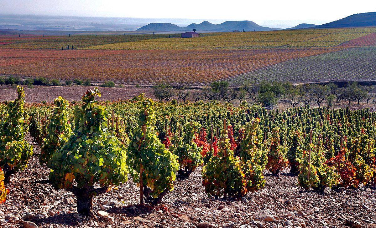 palaces remondo vineyards