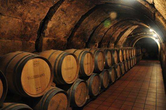 bodegas y viñedos de la marquesa sala de barricas