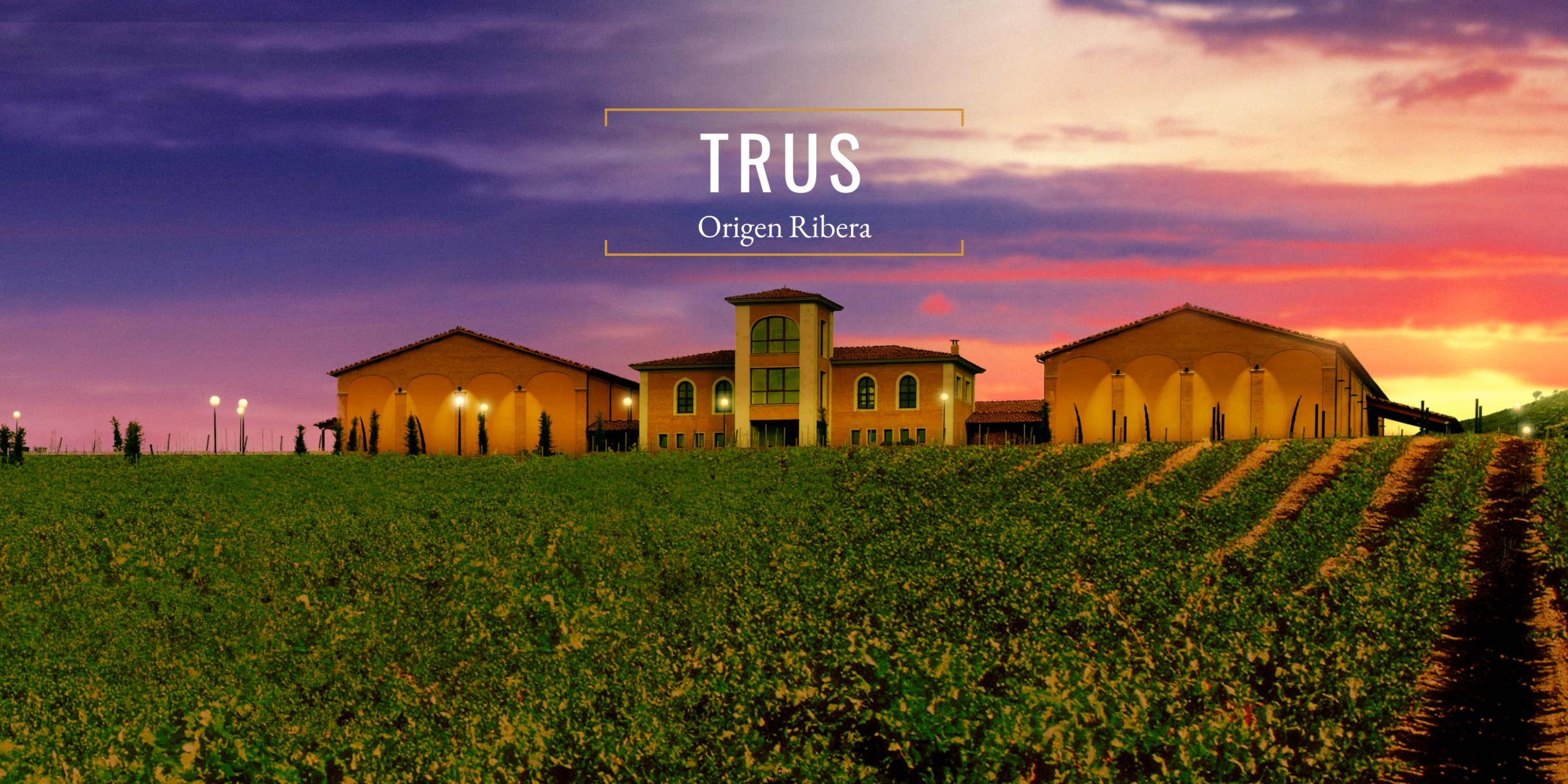 Domaine viticole trus ribera del duero
